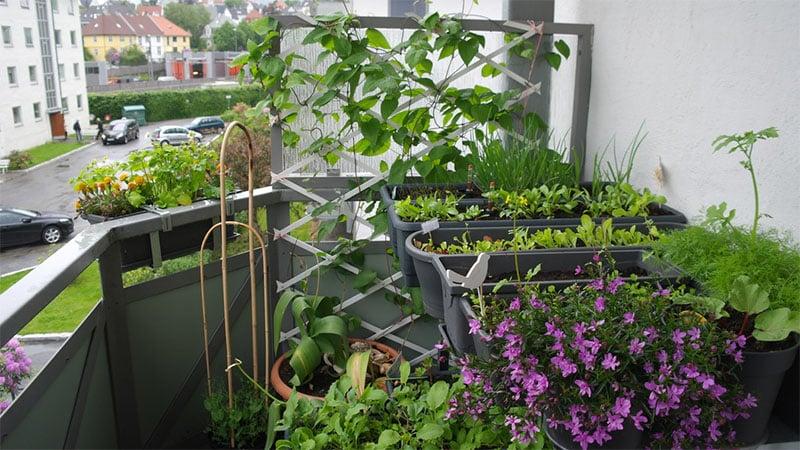 Как посадить огород на балконе и подоконнике: фото идеи, вид.