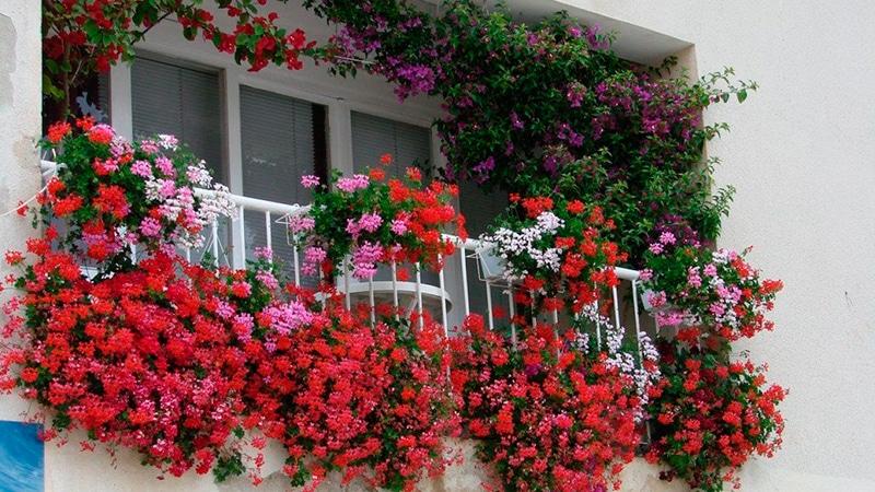 Цветы на балконе: делаем цветник своими руками - фото инструкция