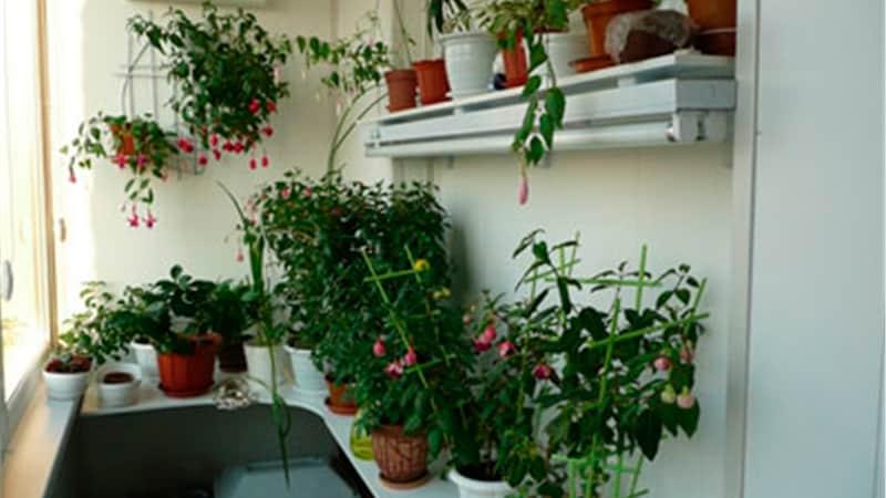 Зимний сад - оформление цветами