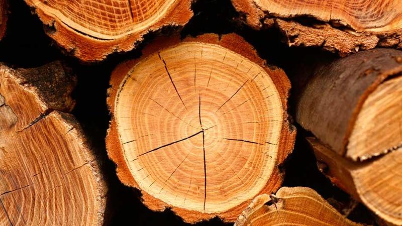 Разновидности древесины для производства дверей