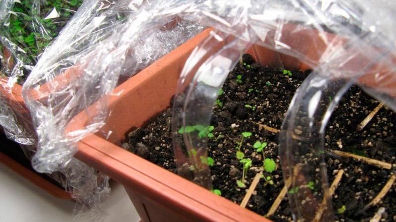 Выращивание клубники в ящиках на балконе