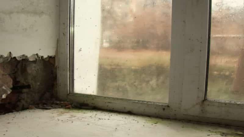 Плесень на окнах пластиковых