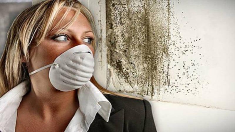Химические способы борьбы с плесенью