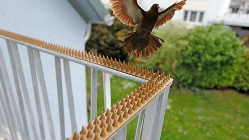Как избавиться от голубей на балконе - самые эффективные способы
