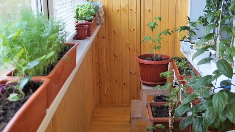 Как обустроить огород на балконе - свежие овощи круглый год