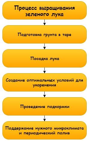 Лук на балконе: выращивание различными способами и особенности ухода