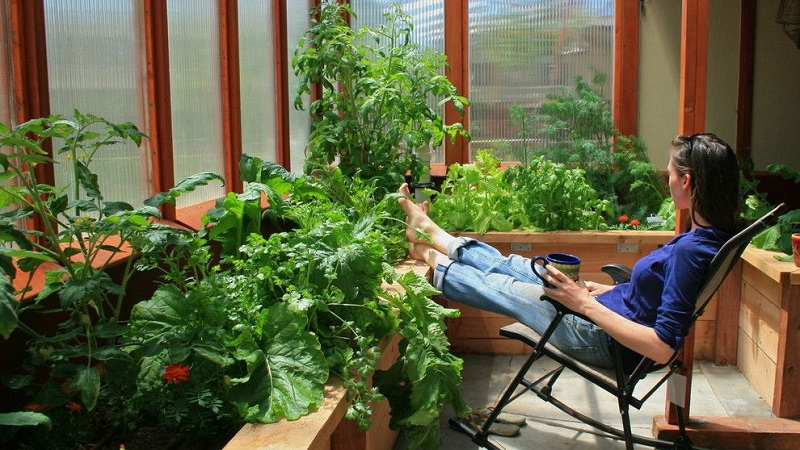 Как обустроить зимний сад в квартире: рациональное использование пространства