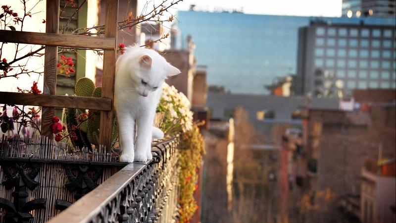 Приснился балкон - что означает такой сон