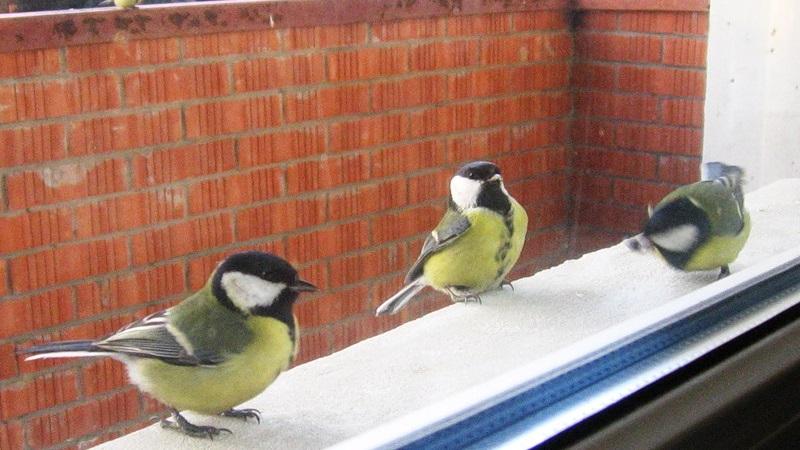 Птица залетела на балкон: примета о разных видах пернатых